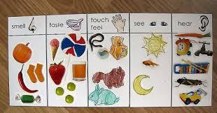 pinterest preschool crafts five senses   Joe created a 5 senses ...
